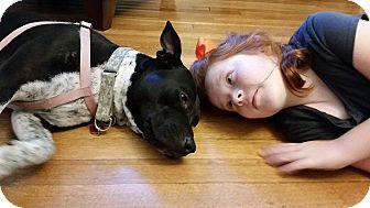 Labrador Retriever/Cattle Dog Mix Dog for adoption in Memphis, Tennessee - Darla