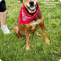 Adopt A Pet :: Emerson - ADOPTED! - Zanesville, OH