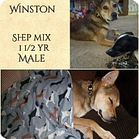 German Shepherd Dog Mix Dog for adoption in DeForest, Wisconsin - Winston