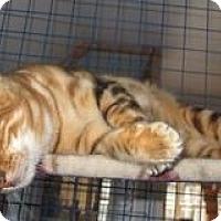 Adopt A Pet :: Mahler - Davis, CA