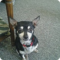 Adopt A Pet :: Mickey - Hilliard, OH