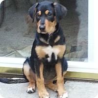 Adopt A Pet :: Baby Allie - Marlton, NJ