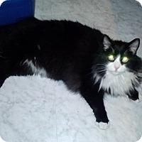 Adopt A Pet :: Meowy - Delmont, PA