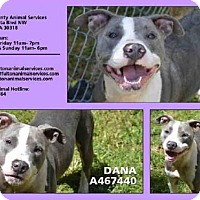 Adopt A Pet :: DANA - Atlanta, GA
