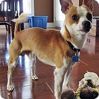 Adopt A Pet :: Bandit - Toronto, ON