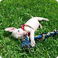 Adopt A Pet :: Khali - Miami, FL