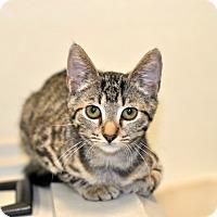 Adopt A Pet :: Paula - Wilmington, NC