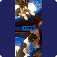 Adopt A Pet :: Toby in CT - East Hartford, CT