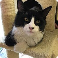 Adopt A Pet :: Chablix - Island Park, NY