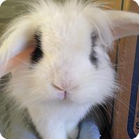 Adopt A Pet :: Dominic - Watauga, TX