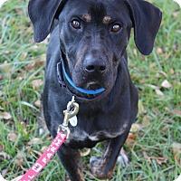 Adopt A Pet :: Pez - Waldorf, MD