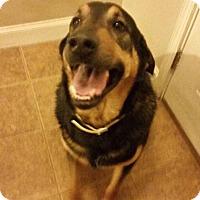 Adopt A Pet :: Reggie - Hollis, ME