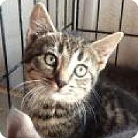 Adopt A Pet :: Manny - Breinigsville, PA