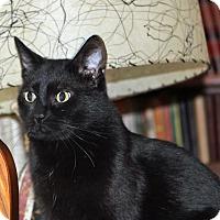 Adopt A Pet :: Shadow - Hillsboro, IL