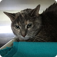 Adopt A Pet :: Meow - Elyria, OH