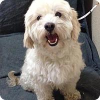 Adopt A Pet :: Missy - Turlock, CA
