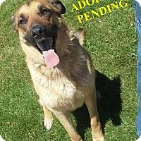 Adopt A Pet :: PENNIE - Winnipeg, MB