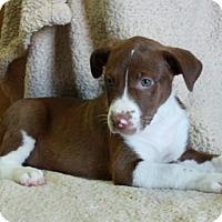 Adopt A Pet :: Albany - Foster, RI