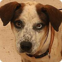 Australian Cattle Dog Mix Dog for adoption in McDonough, Georgia - ROCKET