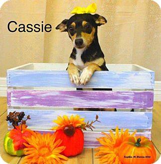 Chihuahua/Dachshund Mix Dog for adoption in Shreveport, Louisiana - Cassie