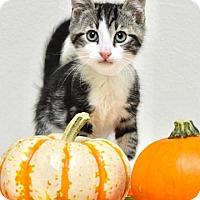 Adopt A Pet :: Inigo - Dublin, CA