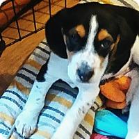 Adopt A Pet :: Ben - Northumberland, ON