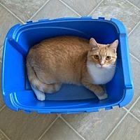 Adopt A Pet :: Empress - Winnipeg, MB