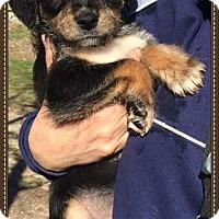 Adopt A Pet :: Lennox - Alta Loma, CA