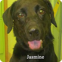 Adopt A Pet :: Jasmine - Warren, PA