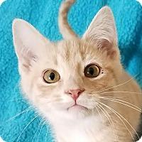 Adopt A Pet :: Lincoln - Colfax, IA