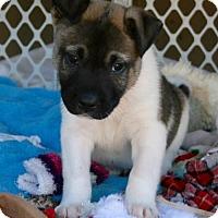 Adopt A Pet :: Mongo - Holly Springs, NC