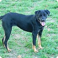 Adopt A Pet :: abby - cameron, MO