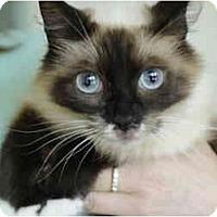 Adopt A Pet :: Portia - Columbus, OH