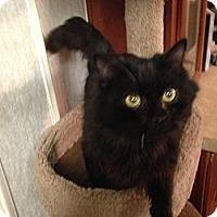 Adopt A Pet :: Manual - Pace, FL