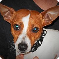 Adopt A Pet :: Bubba - Plain City, OH
