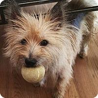 Adopt A Pet :: KIMEE IN AZ - Fort Worth, TX