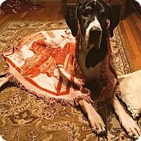 Adopt A Pet :: Jack - Manassas, VA