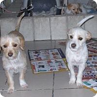 Adopt A Pet :: Blondie - San Ysidro, CA