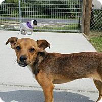 Adopt A Pet :: Sooki - Weeki Wachee, FL