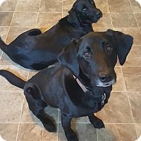 Adopt A Pet :: Charlie - Charleston, SC