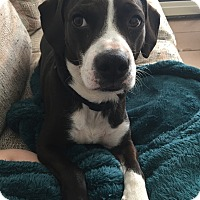 Adopt A Pet :: Franklin - Foster, RI