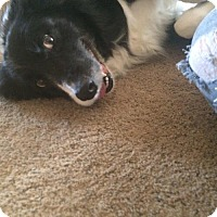 Adopt A Pet :: Buddy (Courtesy Listing from Ottumwa, IA) - Evansville, IN