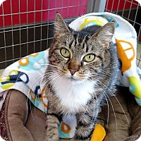 Adopt A Pet :: Juliet - Winchendon, MA