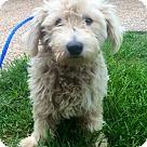 Adopt A Pet :: Alex