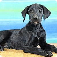 Adopt A Pet :: Leland - Starkville, MS