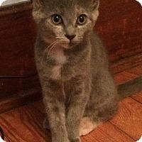 Adopt A Pet :: Jodie - Brattleboro, VT