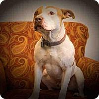 Adopt A Pet :: KASE - Frisco, CO