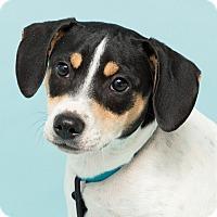 Adopt A Pet :: Bobby - Westfield, NY