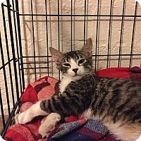 Adopt A Pet :: Zumba - Scottsdale, AZ