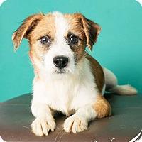 Adopt A Pet :: Truett - Roanoke, VA